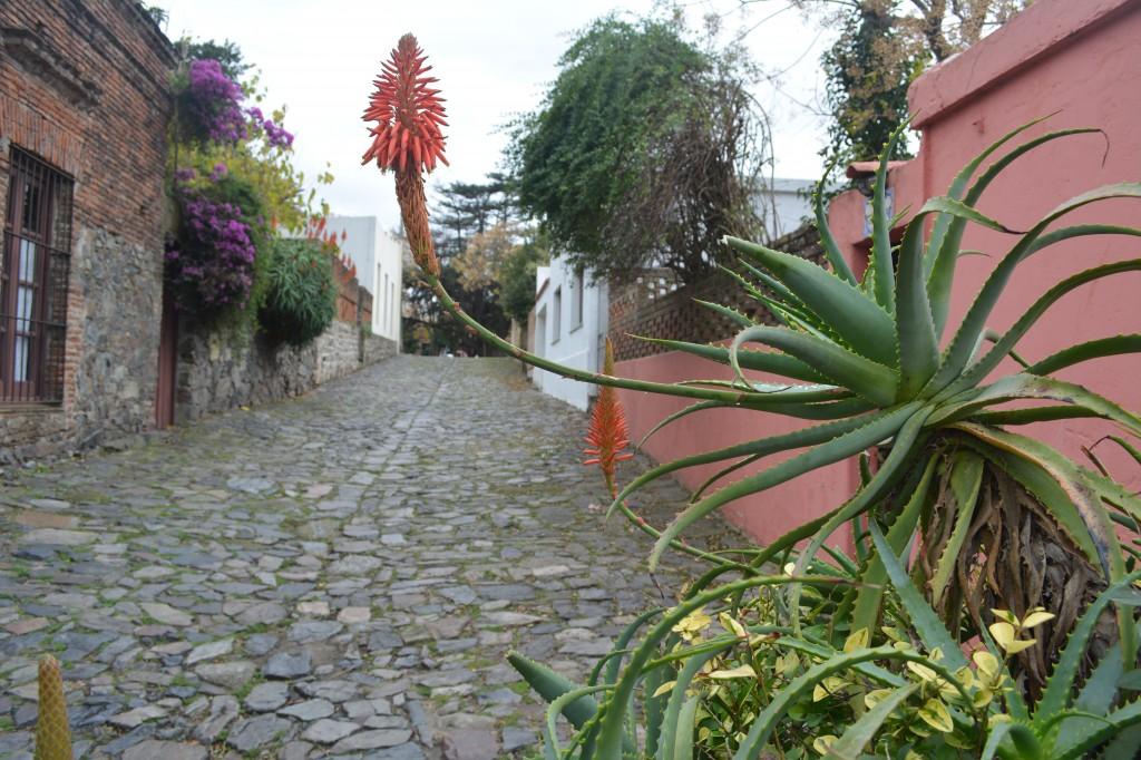Las callesitas adoquinadas conectan un pasado antiguo portugués con otro, más nuestro y rioplatense - Foto Carmen Silveira