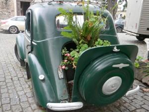Todo es posible en Colonia: un Vauxhall de los años 30 usado como maceta - Foto Carmen Silveira